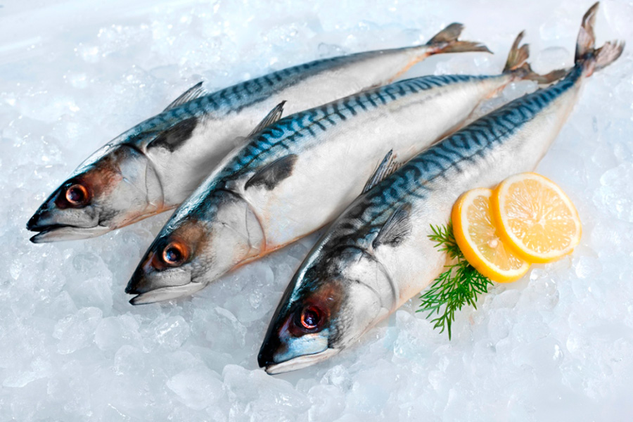 Mackerel best of sea for Oily fish representative species